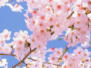 Este primăvară.... Încep pregătirile de Paşte.