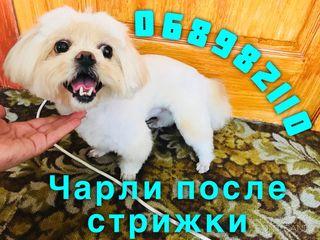 Стрижка собак и кошек Бельцы без наркоза