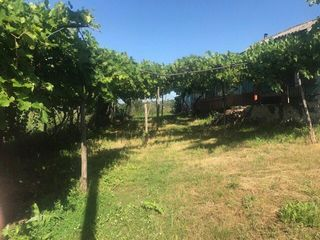Casa batrineasca cu teren aferent 14 ha
