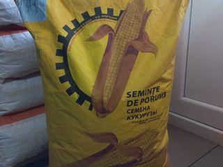 Saminta porumb Rautel / семяна кукурузы Реуцел
