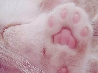 Без кота - жизнь не та!