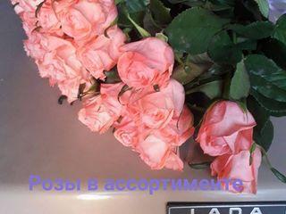 роза   по доступным ценам