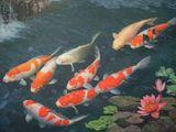 Оптовая и розничная продажа аквариумных рыб
