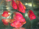 Экзотические рыбы !