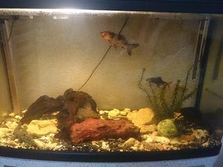 Продаётся аквариум с рыбами 120л. фабричный