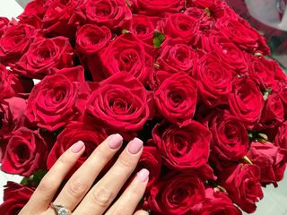 Trandafiri 20 lei
