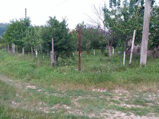 Teren in satul Bic regiunea tabacarii