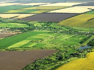 Terenuri agricole 453 hectare