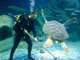 Обслуживание аквариумов. Deservirea acvariu.