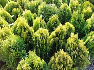 Plante decorative. Asortiment nou
