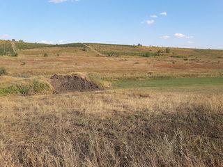 Vînd 58 ari teren arabil în Suruceni