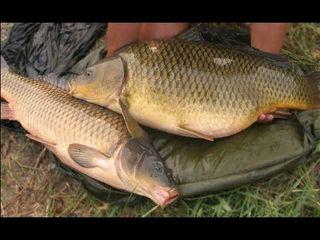 Свежое рыба!!!