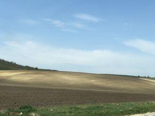14  hectare pe traseul hincesti-cimislia la 2 km de hincesti