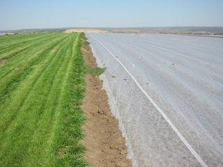 Agril-  material pentru protejarea plantelor de îngheţ