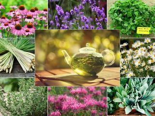 Plante medicinale aromatice