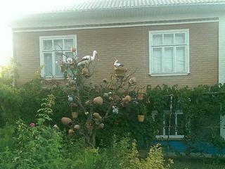 Gospodarie in satul Tarigrad