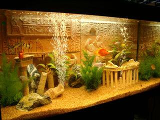 Обслуживание аквариумов, чистка аквариума