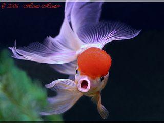 Продаю аквариумных рыбок по низким ценам