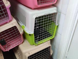 Hrana pentru pisici cini accesorii !