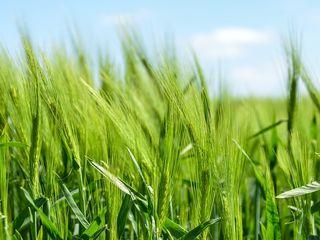 Cumpar pamint agricol,Peresecina Orhei linga padure dau pret bun. de la 30 ari pina la un hectar dau