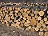Lemn tare stejar frasan carpan
