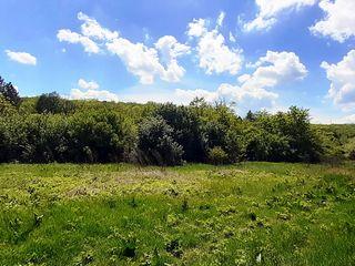 Граничит с лесом, городские коммуникации, 3,5 км от района Ciocana.