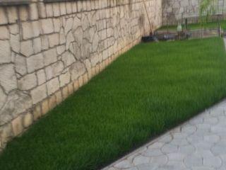 Ingrasamint pentru iarba de gazon,reinvie iarba galbena ,pete uscate.100 lei kg