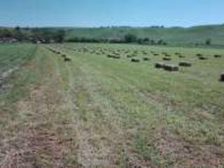Pamint arabel-1 hect=6000 evro.-avem 20 hectare