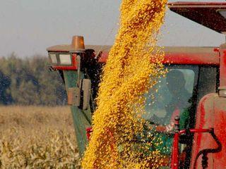 Кукуруза 1.9  наличкой