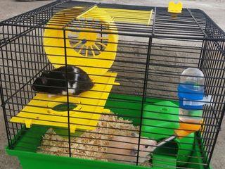Vind sau schimb   urgent hamsteri