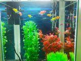 аквариумы и черепашки