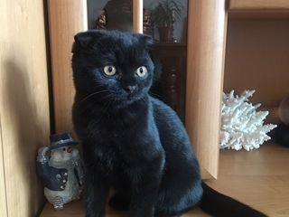 100 € вознаграждение! просим о помощи!!! вчера выбежал на котик и не можем найти. племяник