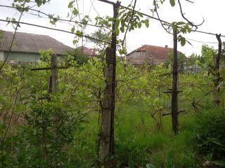 Se vinde casa in orasul Ialoveni