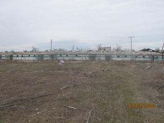 Se vinde ferma pentru  pasari eco