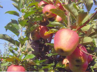 SYNERGIL fertilizant bio pentru fructe și legume frumoase și sănătoase