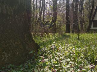 Комплекс в лесу на берегу Днестра