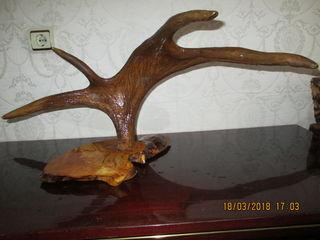 Рога лося и оленя