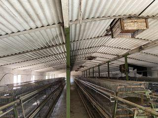 Ferma de vaci , porci, pasari 8,5 hectare linga traseu Orhei