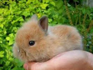 Декоративные крольчата.Крысята.