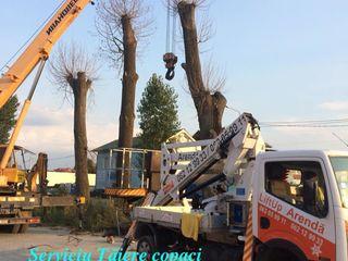 Tăieri -curățare - doborîri pomi / arbori / copaci. Servicii Autoturn/ Alpinism .