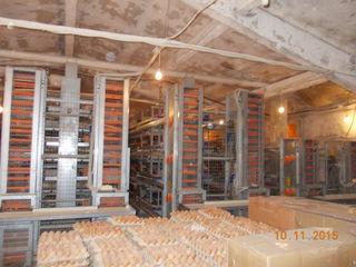 Se vinde complexul agroindustrial cu utilaj pentru intretinerea pasarilor ouatoare