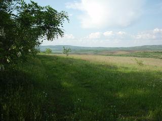 Vand 37 ha, teren agricol in raionul Ungheni, Negurenii Noi