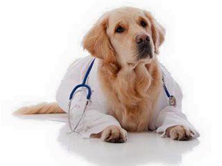 "Clinica și farmacie veterinară ""iurionvet"""