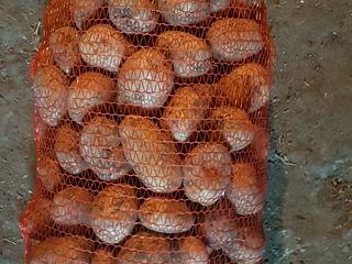 Vind cartofi bio