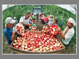 Яблоневый сад. Окница - село Бырново