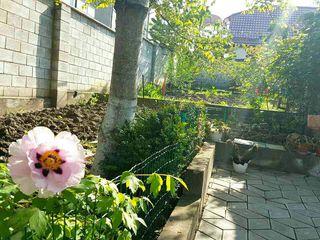 Светлый домик Ботаника