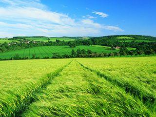 Teren arabil 8-10 hectare