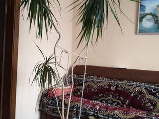 продам пальму 2,2 м