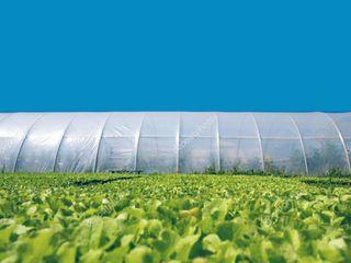 Тепличные плёнки 120-150 мкр  Ширина  6,8,9.10,12.14.16 метров  Агроволокно  агроткань