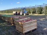 Containere din lemn pentru mere! Oferta speciala!